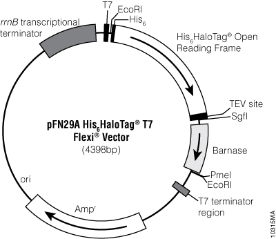 pFN29A His6HaloTag® T7 Flexi® Vector.